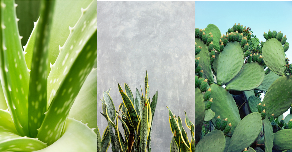 planten verzorgen makkelijk