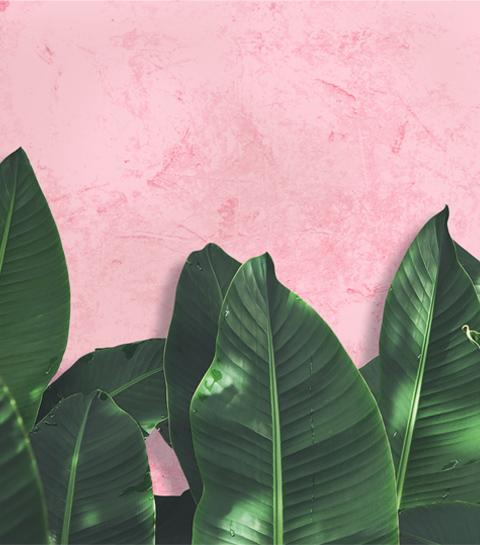 Met deze tips gaan je planten nooit meer dood