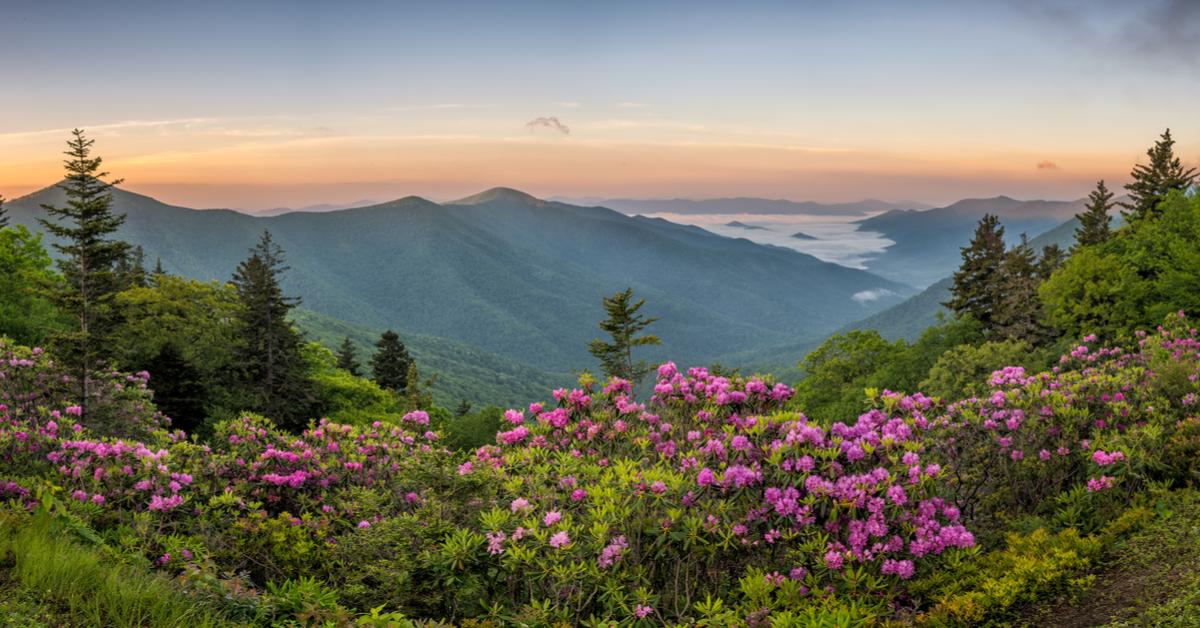 Bloemenvelden bloemen reis trips vakantie