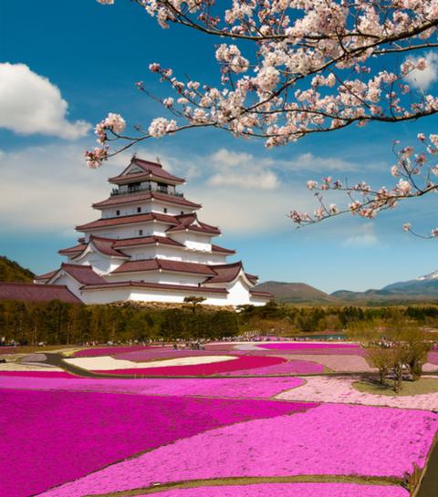 Wanderlust: de allermooiste bloemenvelden ter wereld