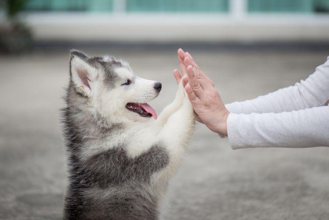 honden kantoor gelukkig