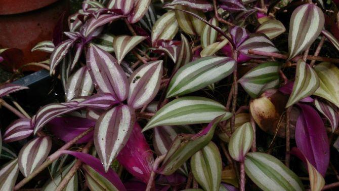 10 roze planten die jouw interieur opfleuren - 1