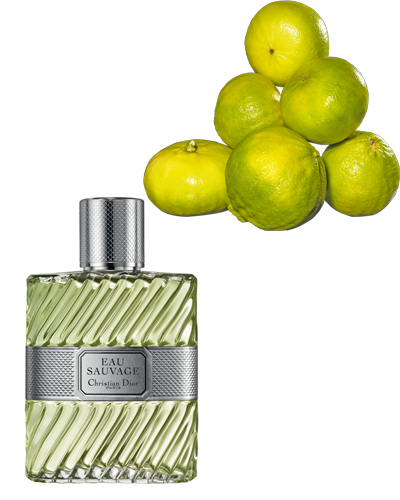 dior parfum eau sauvage bargamot