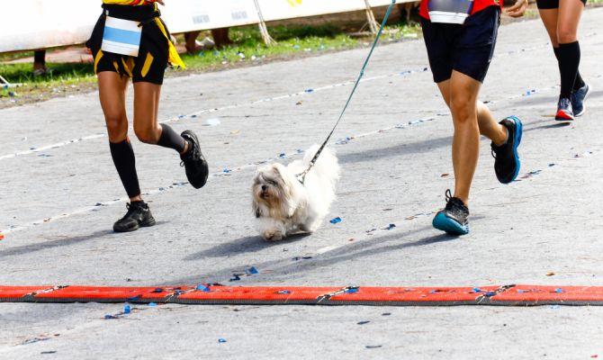 activiteiten hond lopen