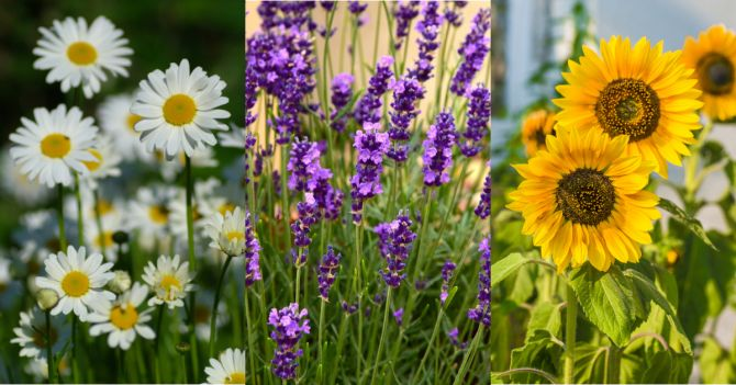 planten bloemen warme temperaturen hitte