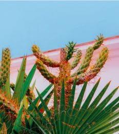 Zo overleven je planten de hitte