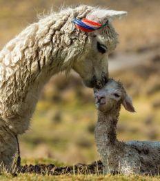 Pairi Daiza: Deze schattige babydiertjes kan je er deze zomer ontdekken
