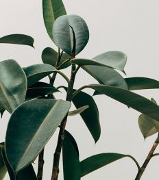 Go green: onze favoriete plantenwinkels in Brussel