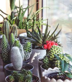 Dit zijn de leukste bloemen- en plantenwinkels in Antwerpen