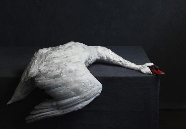 fomu antwerpen expo fotografie cultuur kunst