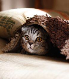 Huisdieren en corona: waar moet ik op letten?