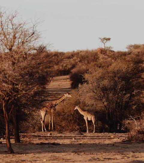 Namibië: tot rust komen in de eindeloze woestijnvlaktes