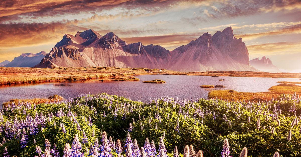 wildkamperen_schotland_ijsland_scandinavië