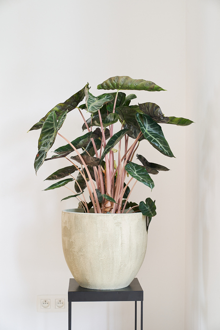 Hebben: de stijlvolle plantenpotten van D&M Deco - 2