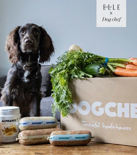 Wedstrijd : win voor twee weken gezond eten voor je hond