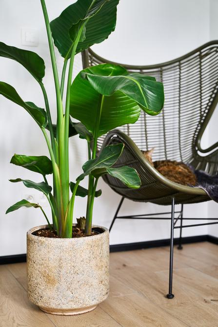 Hebben: de stijlvolle plantenpotten van D&M Deco - 4