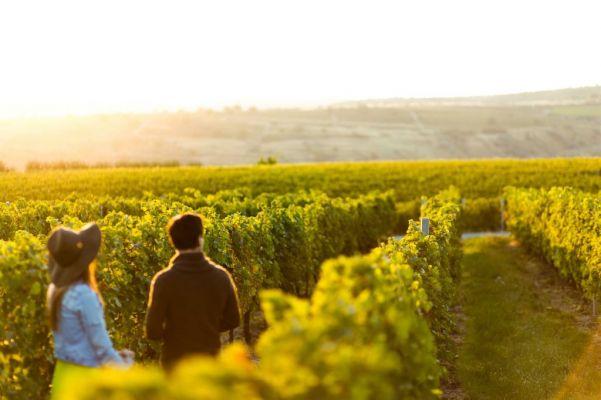 winery-1-1024×682