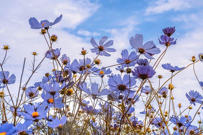 pollenallergie hooikoorts