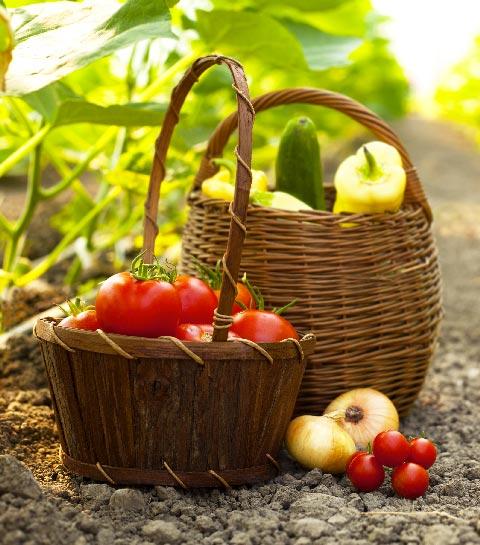 Wat planten we in juli in onze groentetuin?