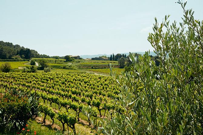 Côtes du Rhône wijngaard